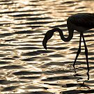 Flamingo in Walvis Bay, Namibia by Wild at Heart Namibia