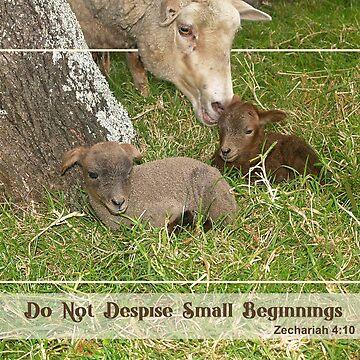 Small Beginnings - Damara Lambs by junglequeen