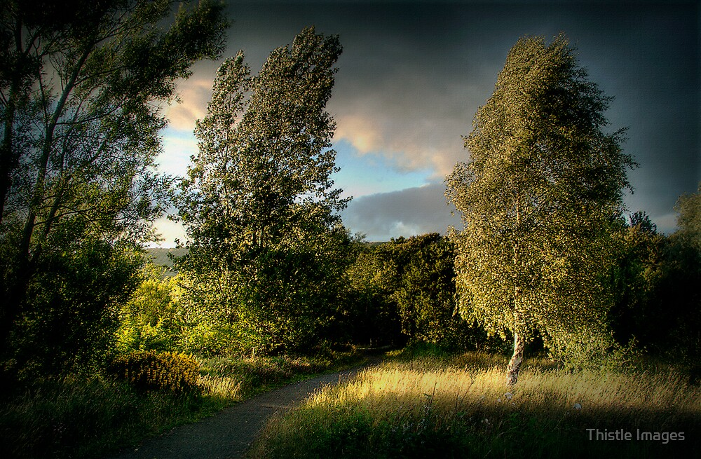 Evening Light by Thistle Images