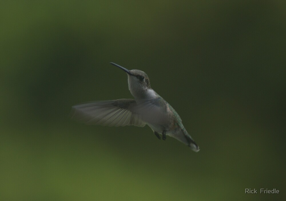 Hummer by Rick  Friedle