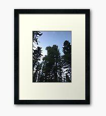Pine Trees in the sky Framed Print