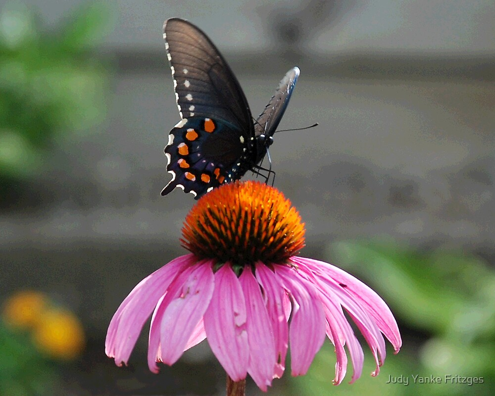 Posed Butterfly by Judy Yanke Fritzges
