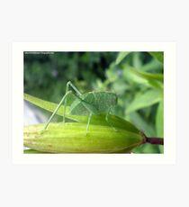 Green Bug On A Pod Art Print