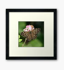 Speckled Wood or Wood Argus Framed Print