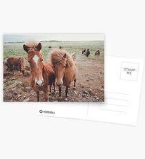Island Ponys Postkarten