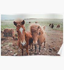 Island Ponys Poster