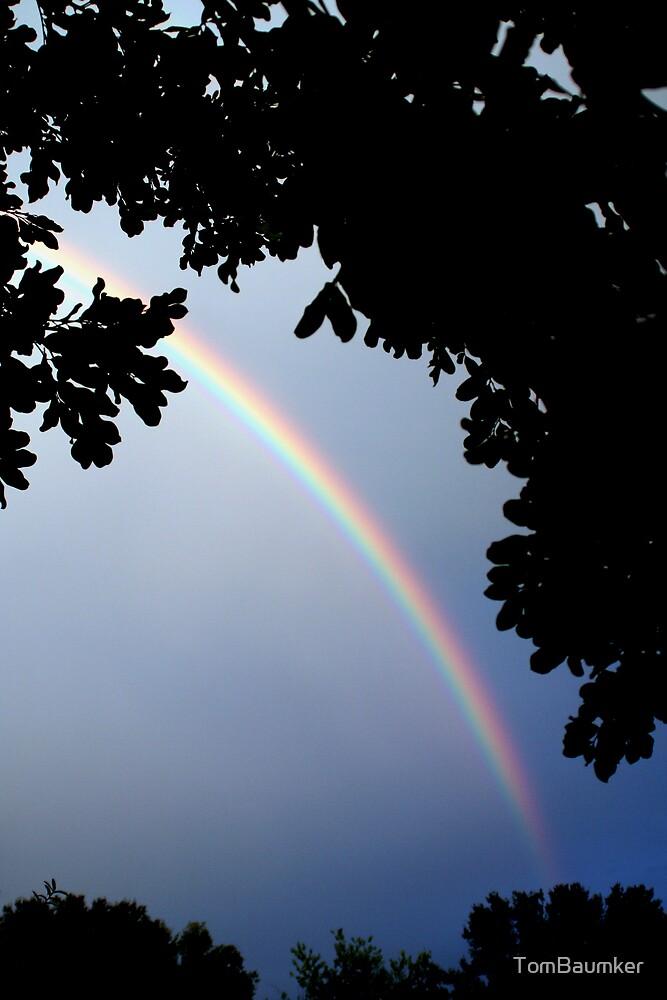 RAINBOW by TomBaumker