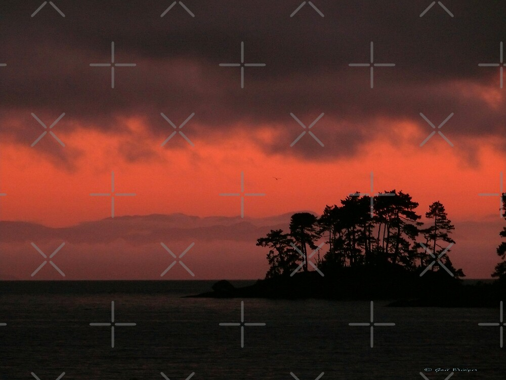 Red Sky At Morn by Gail Bridger