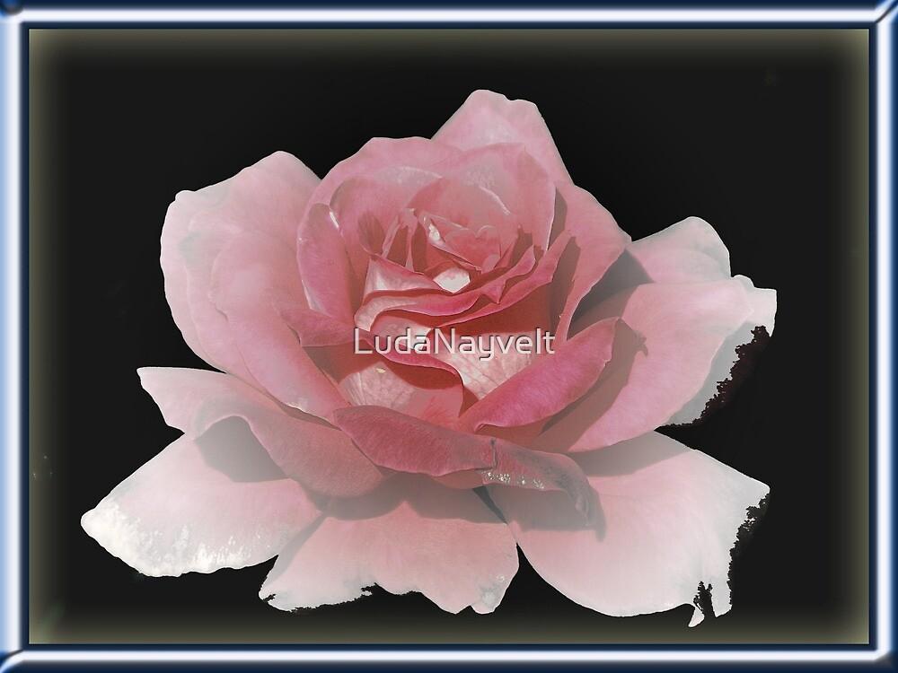 Pink Lady by LudaNayvelt