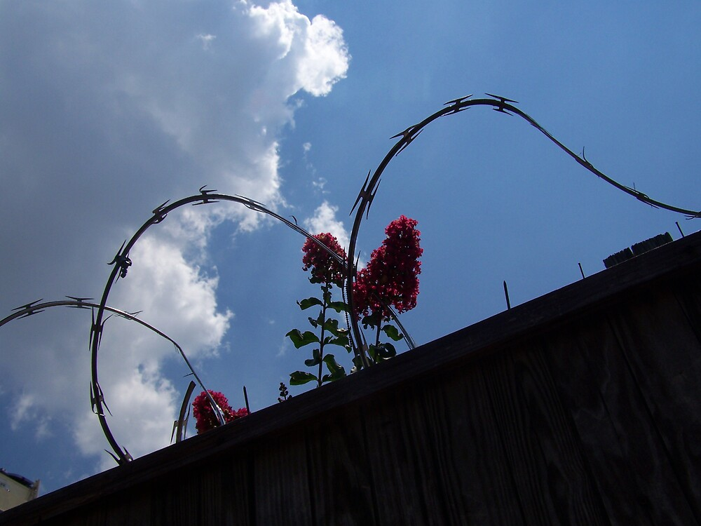 Flowers and Razorwire by WB7PTR