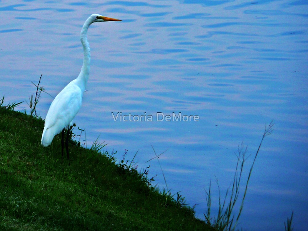 Waterbird I by Victoria DeMore