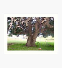 Very Old Oak Tree.. Art Print