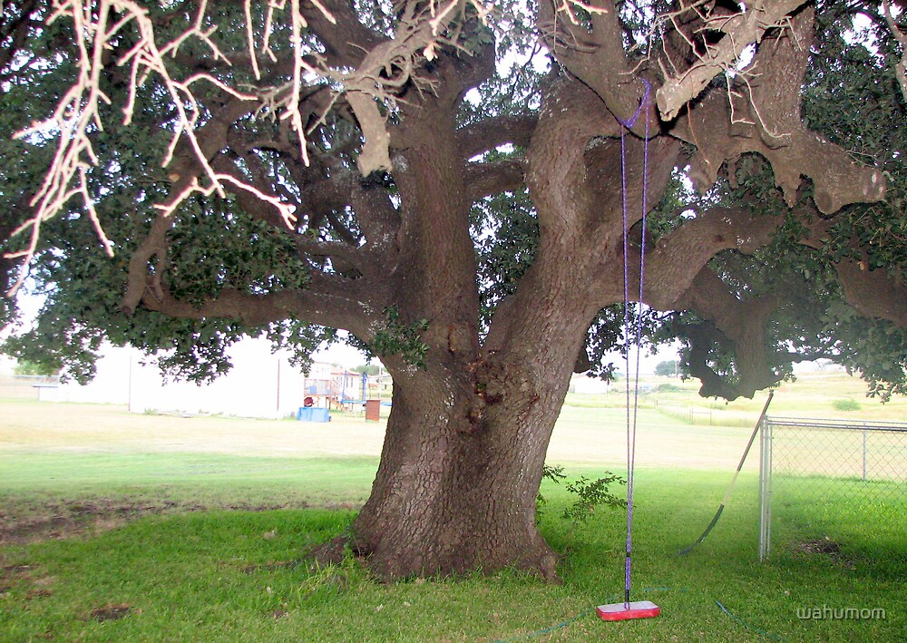 Very Old Oak Tree.. by wahumom