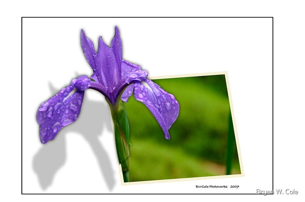 Purple Beauty by Bryan W. Cole