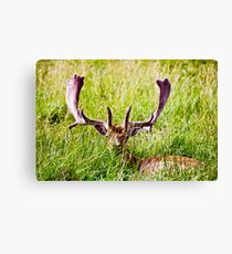 No Hiding Place Canvas Print