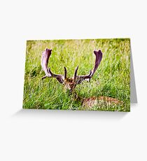 No Hiding Place Greeting Card