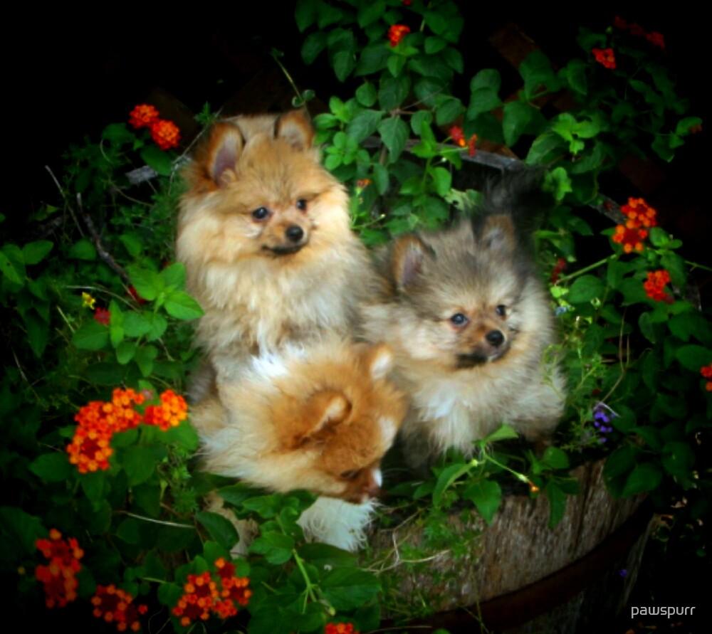 fuzzie flowers by pawspurr