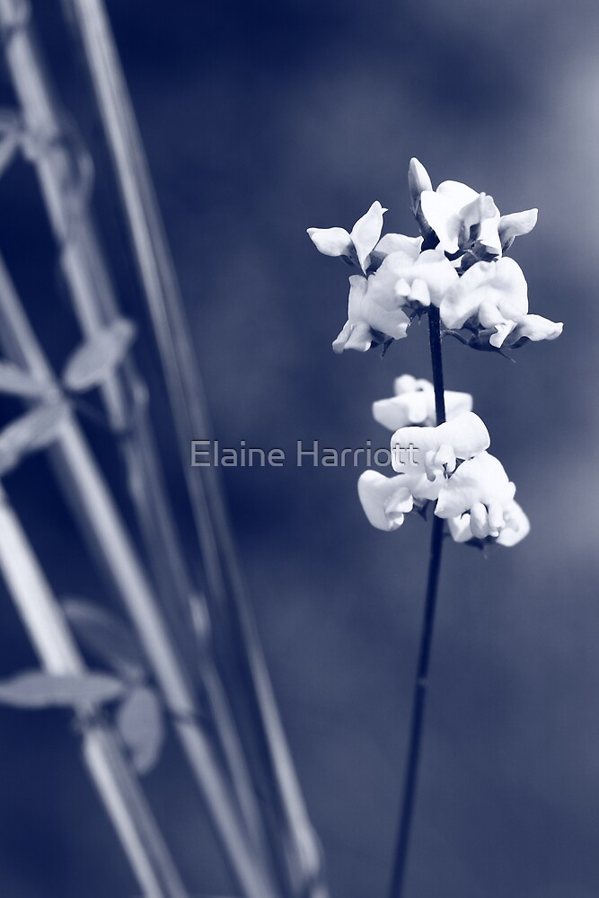 White Whispers by Elaine Harriott
