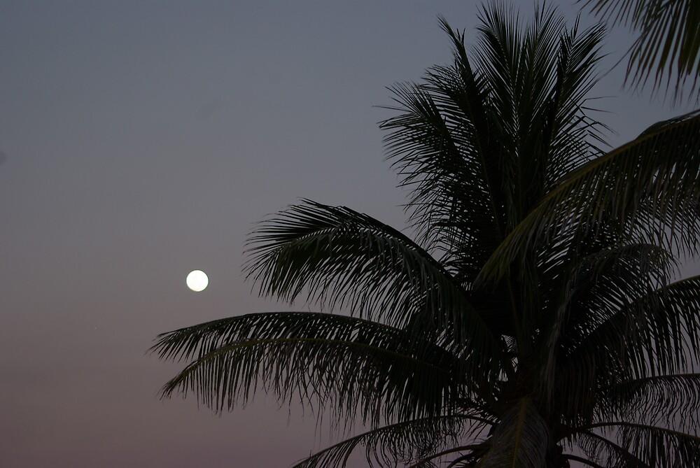 Moon & Palm by jayarr