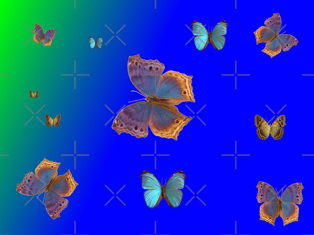 Butterflies Butterflies! by Sandra Chung