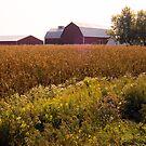 The Farm by cherylc1