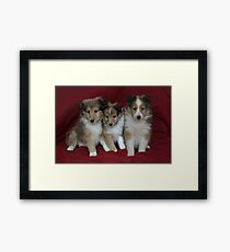 Puppies for Sale!!!! Framed Print