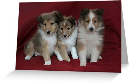 Puppies for Sale!!!! by picketty