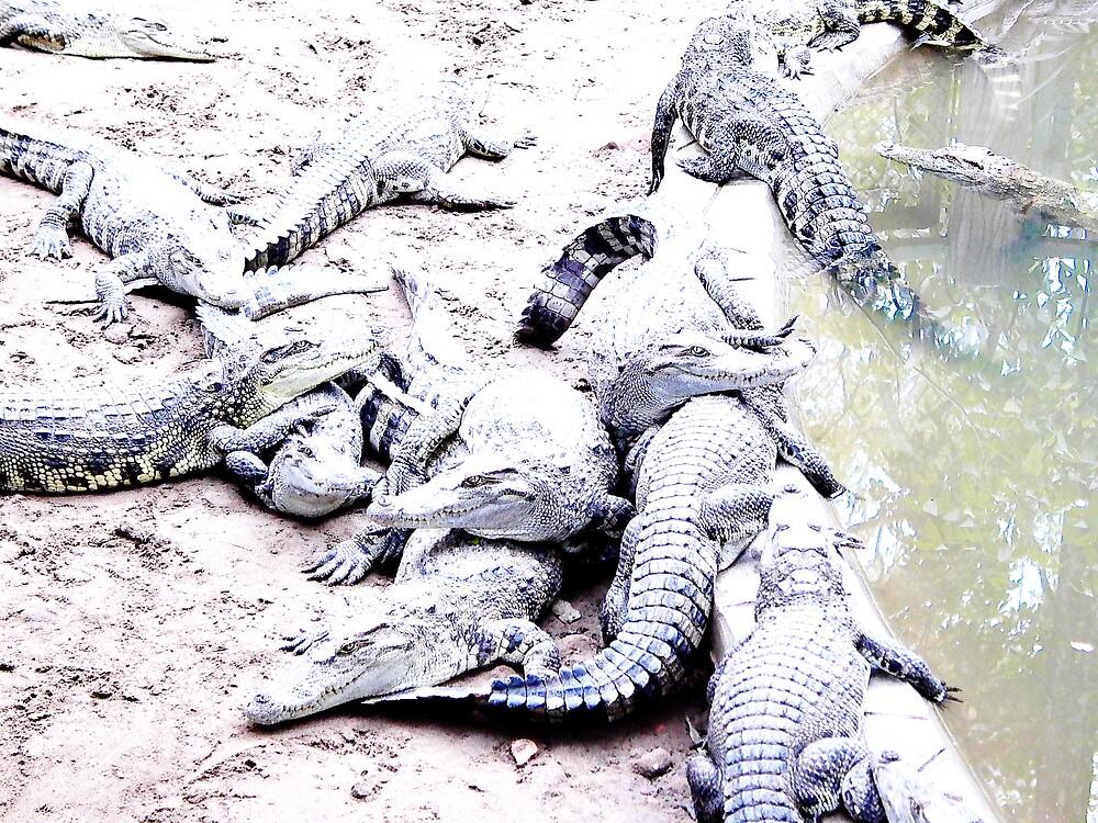 Crocs by nikkinotman