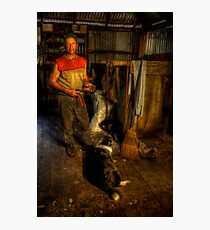 The Shearer. Photographic Print
