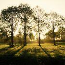 Trees in Sunbeams by ienemien