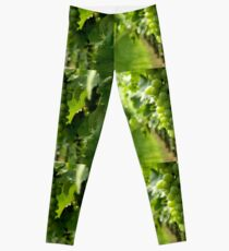 Vineyard View   ^ Leggings