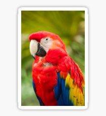 Brightly colored macaw parrot Sticker