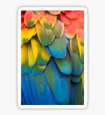 Brightly colored macaw parrot feathers Sticker
