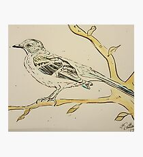 Momma's Mockingbird  Photographic Print