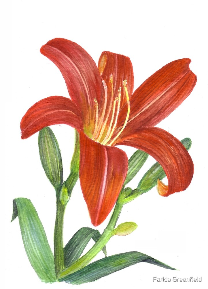 Orange Lily by Farida Greenfield