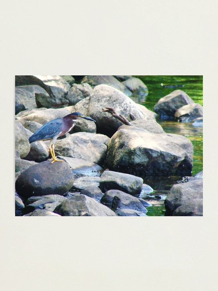 Alternate view of Nature Never Fails You Photographic Print