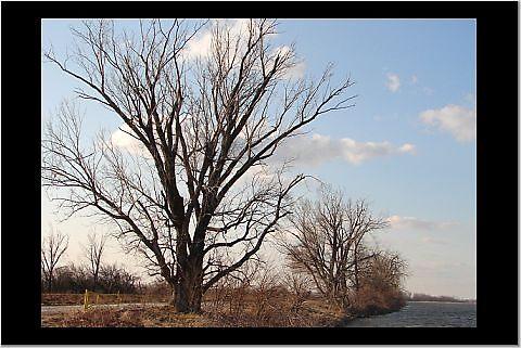 Trees by danabee