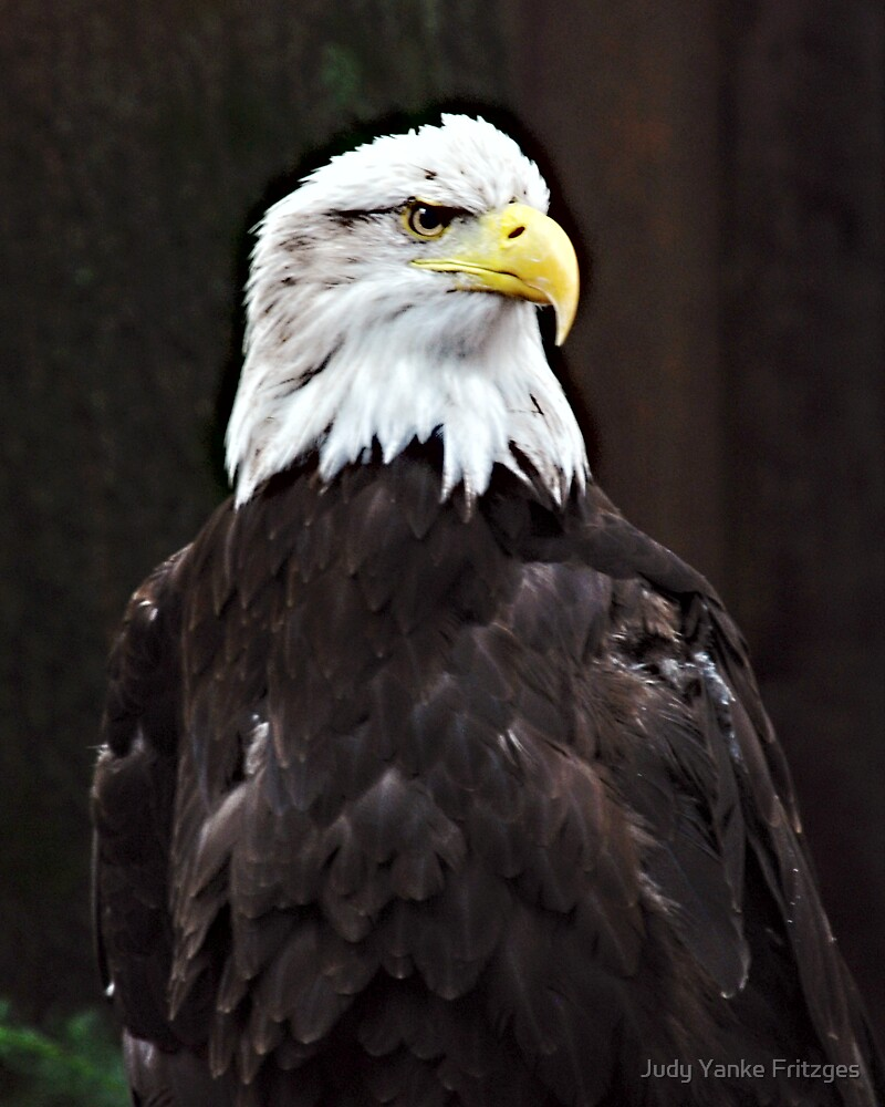 Eagle by Judy Yanke Fritzges