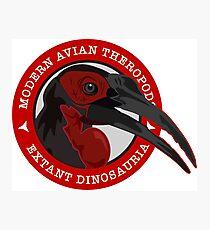 Modern Avian Theropods - Extant Dinosauria: Bucorvus leadbeateri Photographic Print