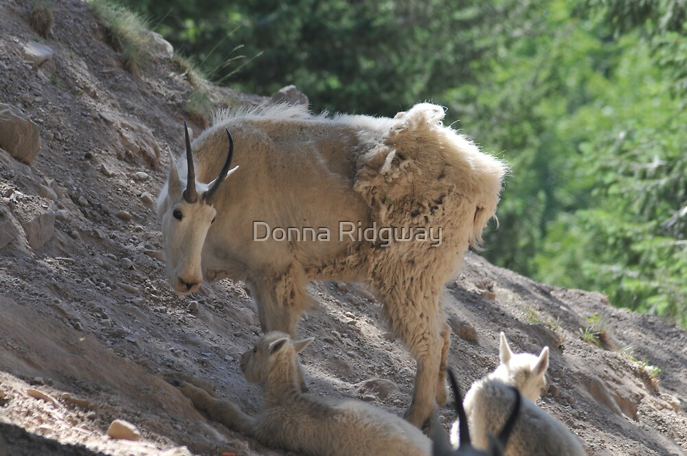 Goat with babies by Donna Ridgway