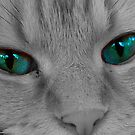 Look into My Eyes by Photography  by Jamye