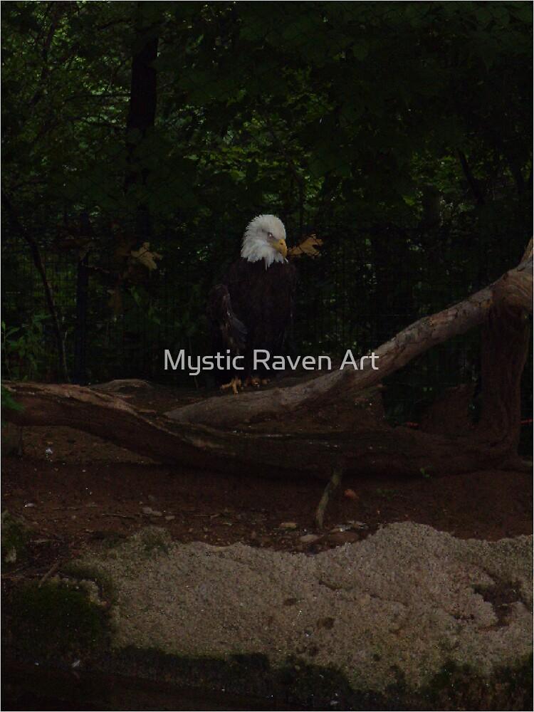 Bald Eagle by Mystic Raven Art