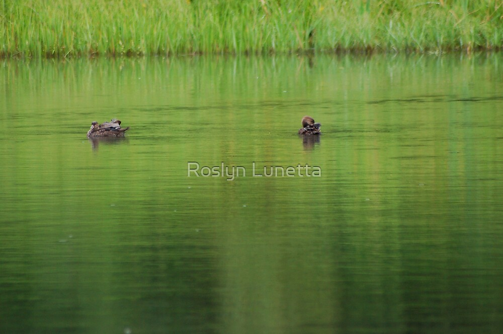 the green of the fire pond by Roslyn Lunetta
