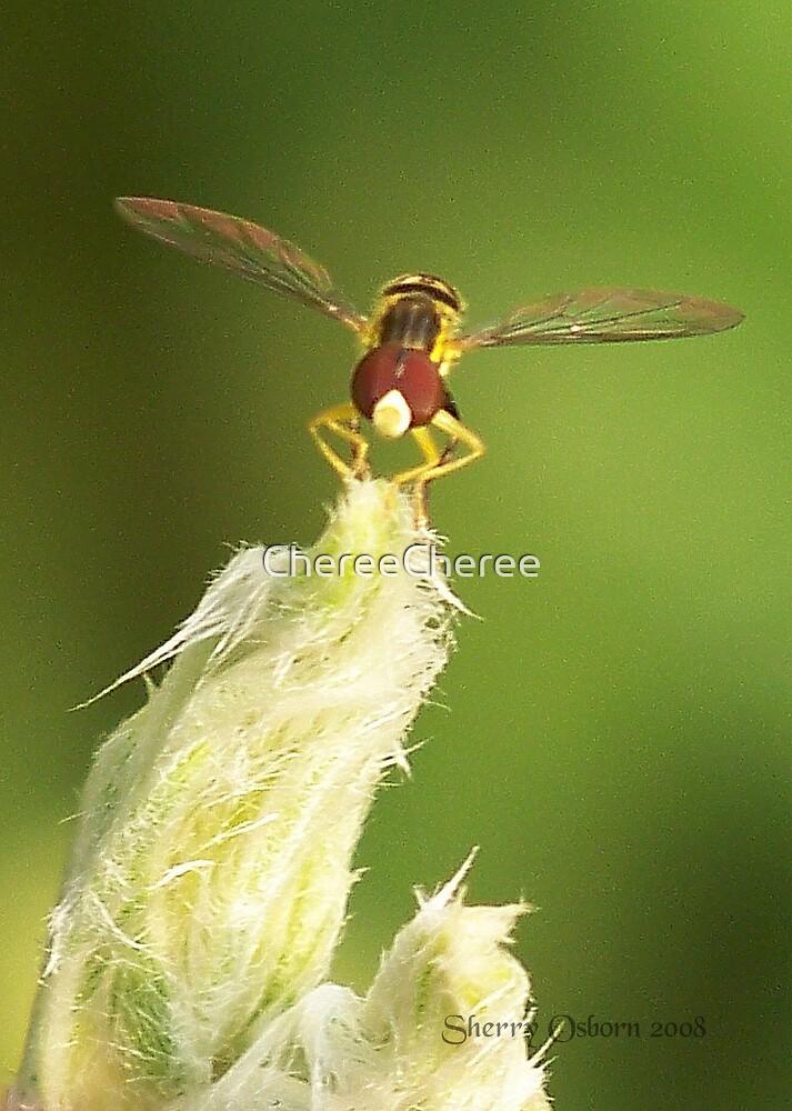 Tiny Insect by ChereeCheree