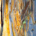 The Tree Bark Collection # 30 - The Magic Tree by Philip Johnson