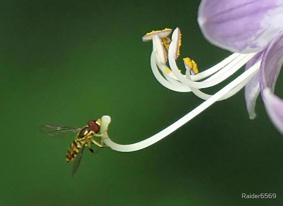 Bee on Hosta by Raider6569