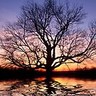 Sunset Silhouette Tree  by daphsam