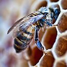Honey Bee by Lawrence Henderson