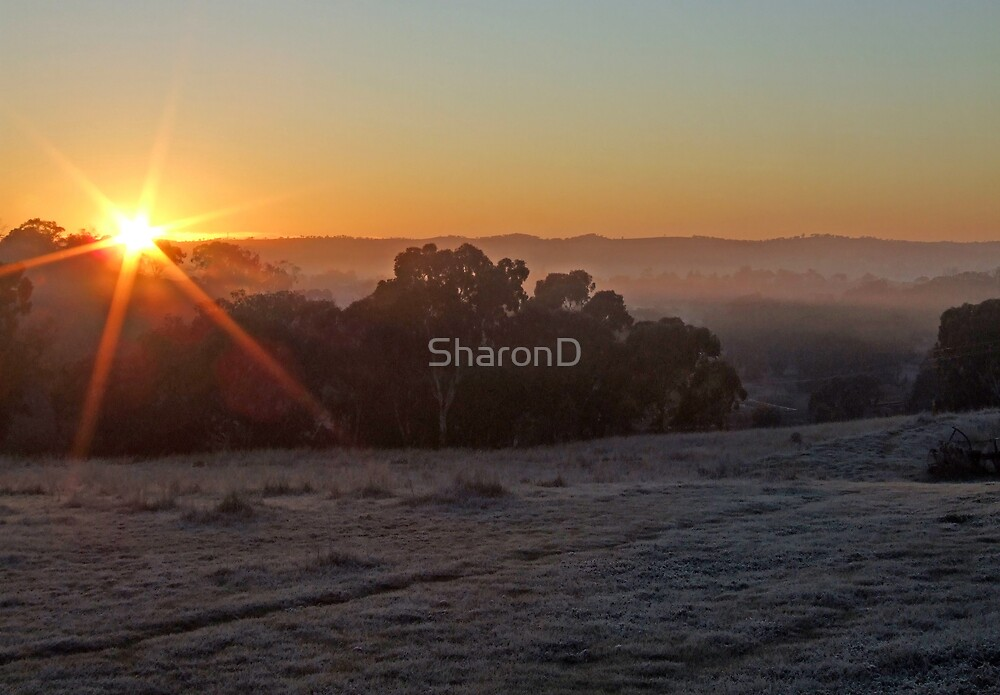 Frosty Morning Sunrise. by SharonD