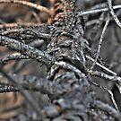 Fallen Branch by Leonell Puso